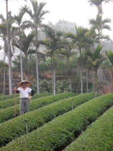 Taiwanese tea farmer, Beipu Township, Hsinchu County
